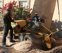 stump-grinding-small